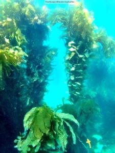 UnderwaterCatalinawatermarked