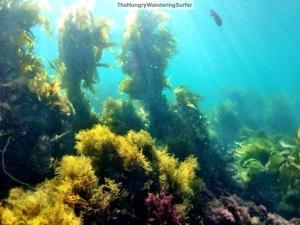 UnderwaterCatalinawatermarked1