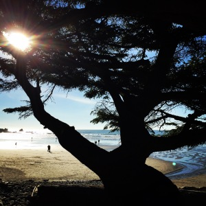 Looking through the trees at Short Sand beach.