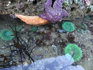 Tide pools are like their own little environment and pretty amazing to check out!