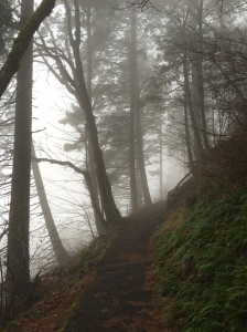 Trail just past Wahkeena Falls.